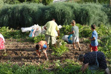 niños y huerto (3)